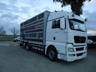 camião de transporte de gado MAN TGX 26 480