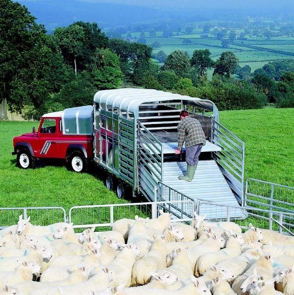 IFOR Williams TA510 reboque transporte animais